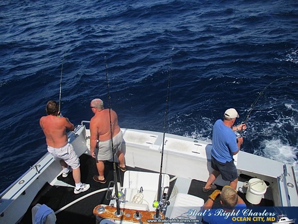 Marlin fishing is fantastic kids and marlin group for Marlin fishing charters